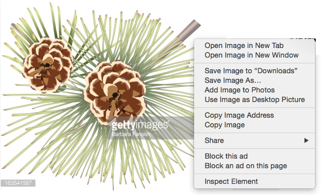 Pine Cone Don't Steal.png